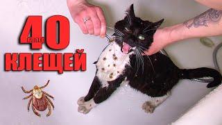 Спасение кота от клещей. Котик ищет дом / SANI vlog