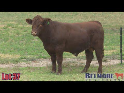 BELMORE QUINN Q174