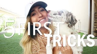 Teaching Nova and YOUR PUPPY their FIRST 5 TRICKS!