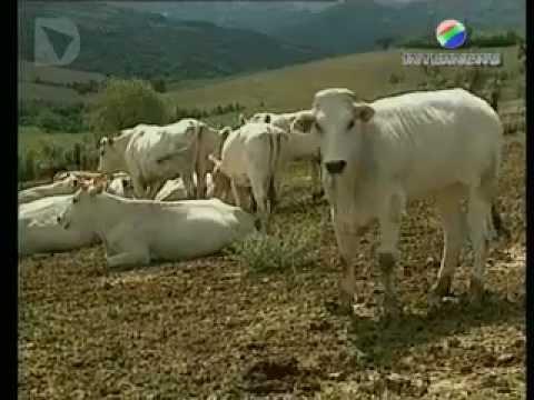La trasmissione è incentrata sull'Expo rurale 2011 e sul significato della partecipazione, attraverso l'UNCEM, dei territori montani.