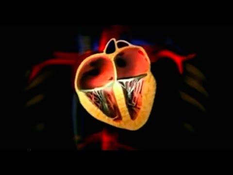 Das Herz - Intensiv! Das Gesundheitsmagazin