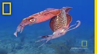 Caribbean Gulf | Exploring Oceans thumbnail