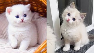 Baby Cats - Cute and Funny Cat Videos Compilation #34