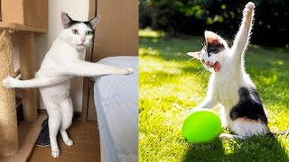 Funniest Animals - Best Of The 2021 Funny Animal Videos #44
