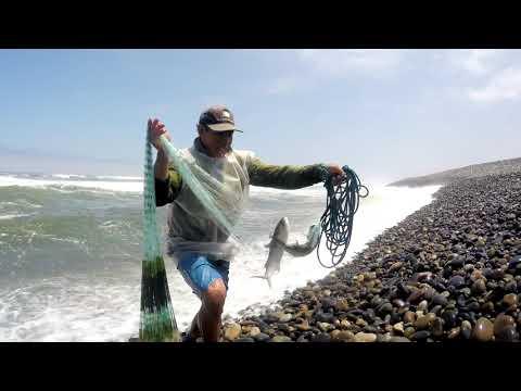 Cattura di una carpa su video boyla pescando su