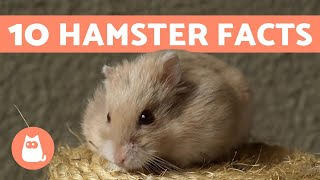 10 Facts About Hamsters - Fun And Helpful Info 💖