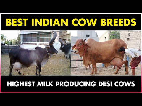 , title : 'Best COW BREED for Milk in India   Gir, Sahiwal, Red Sindhi, Rathi, Ongole, Deoni, Kankrej, Haryana