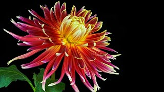 Музыка для души (Цветы распускаются под вальс) !!!