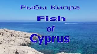 Рыбалка на кипре с берега пафос