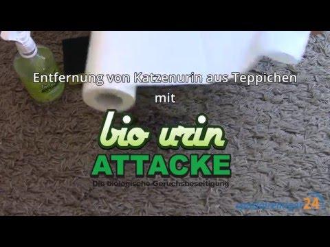 Katzenurin aus Teppich entfernen (mit Bio Urin Attacke)