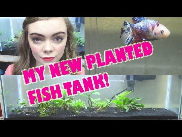 MY NEW PLANTED FISH TANK! + NEW KOI BETTA FISH!!  -Pet Adventures
