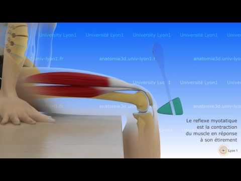 Les muscles des fesses sur la piste