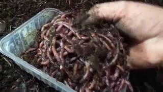 Ферма по разведению червей для рыбалки