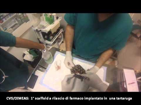 Medicina per lyambliya per - Come vedere parassiti sul pesce