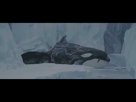 Whale/seal Scene from eight below