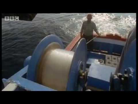 Giant Blue-Finned Tuna | Killer Whale | BBC Animals