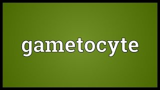 Gametocyte Meaning