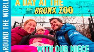 031 Bronx Zoo is Free on Wednesdays