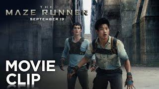 """""""Runners"""" Clip - The Maze Runner"""