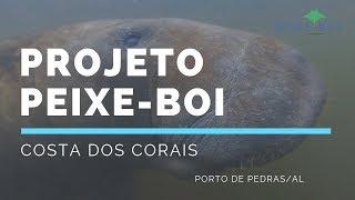 VÍDEO: Projeto Peixe-Boi na Costa dos Corais