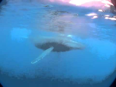 Walbegegnung, Allgemein zu La Réunion,La Réunion