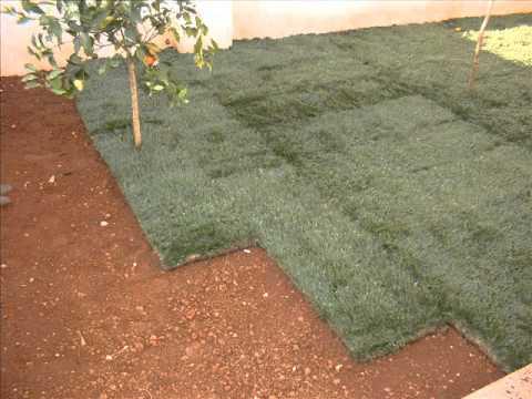 realizzazzione tappeto erboso con prato pronto a rotoli._0001.wmv