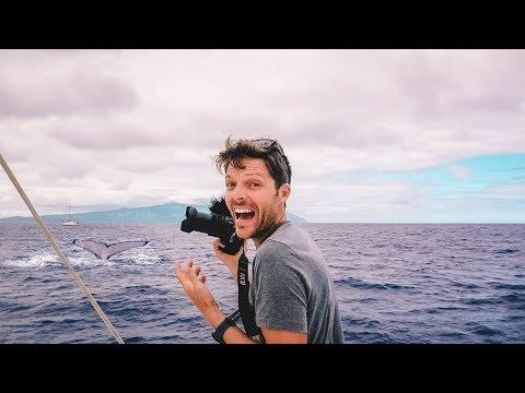 Sailing Tahiti, Iron Wind & WHALES || Cost & Fuel Economy of a Catamaran Sailboat