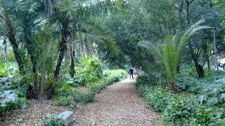 preview picture of video 'Un petit tour au jardin d'essaie/a stroll in jardin d'essaie(El-hama Algiers)01/03/2012'