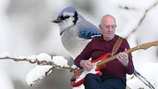 Snowbird - Anne Murray - instrumental cover by Dave Monk