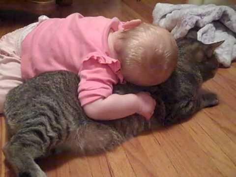 Đây nhất định là con mèo kiên nhẫn và ngoan ngoãn nhất quả đất