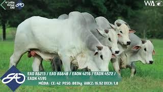 6213 fiv da eao