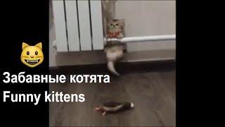 ПРО КОТЯТ. МИЛОТА ЗАШКАЛИВАЕТ! /Video about the kittens. Compilation