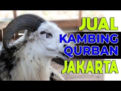 Promo Kambing Qurban 2018