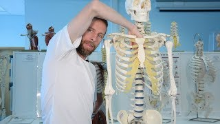 Mediastinum (anatomy)