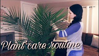 My Plant Care Routine || Simple & Cheap ||