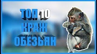 Топ 10 краж обезьян. Смотреть видео приколы с животными. Подборка ржачных видео приколов 2019.