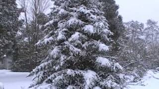 Snowy Saturday Morning