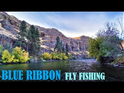 Blue Ribbon Fly Fishing