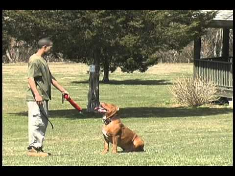 "Worlds best trained dog ""AMAZING"" AWESOME DOGS!"