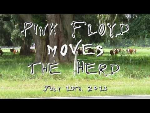 , title : 'Pink Floyd Cows