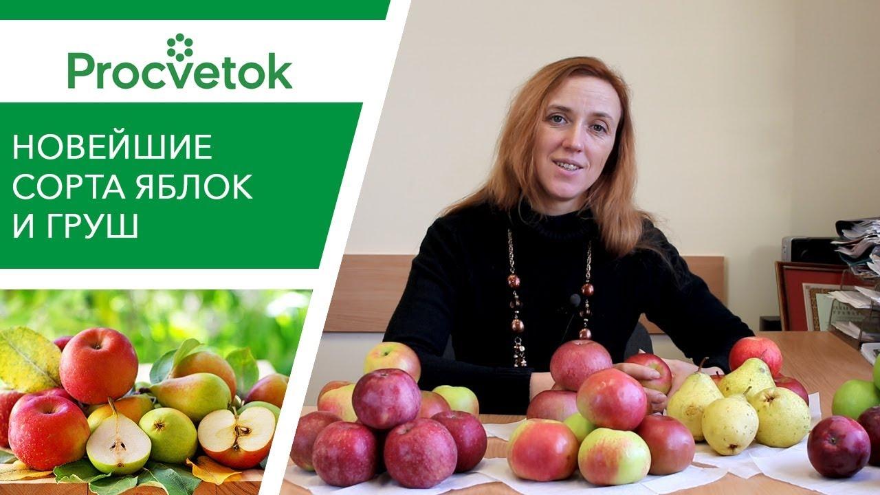 Новейшие сорта яблонь и груш белорусской селекции