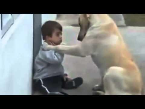 狗狗是人類最好的朋友!好感動!