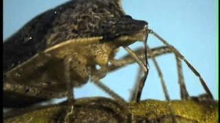 Stink Bug on Pecan