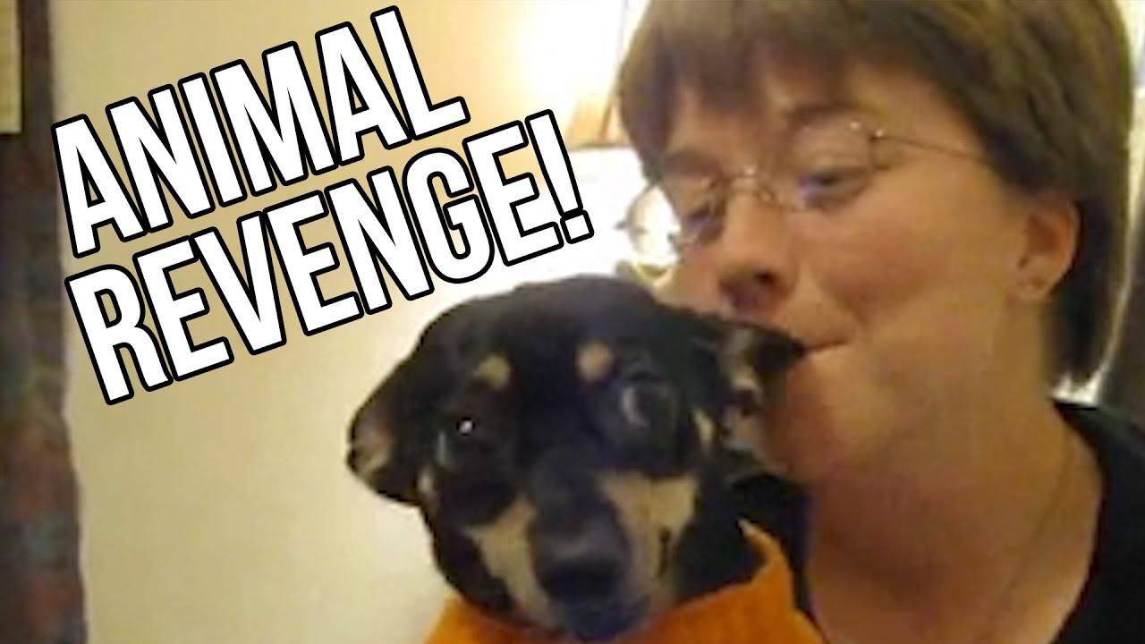 21 Animals Exacting Their Revenge thumbnail