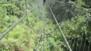 preview picture of video 'Gabon - Franceville Lekedi Parc Suspended Bridge'