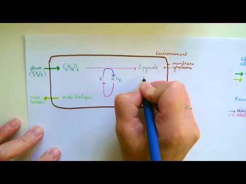 Le microorganisme végétal de longle sur le pied aller à quel médecin