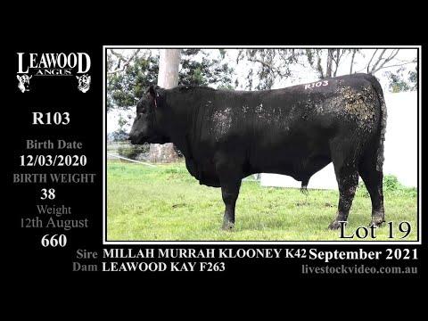 LEAWOOD KLOONEY R103 (AI)
