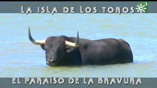 Baño En La Isla De Los Toros De Gavira Tras El Entrenamiento | Toros Desde Andalucía