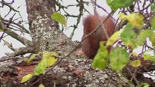 Le geai, l'écureuil et les pics