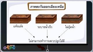 สื่อการเรียนการสอน องค์ประกอบของดิน ป.1 วิทยาศาสตร์
